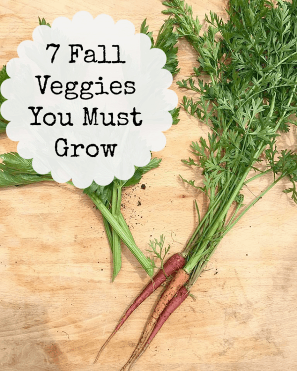 7 Veggies You Must Grow in Your Fall Garden