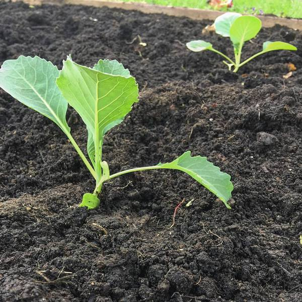 Maximize Your Harvest with Succession Planting