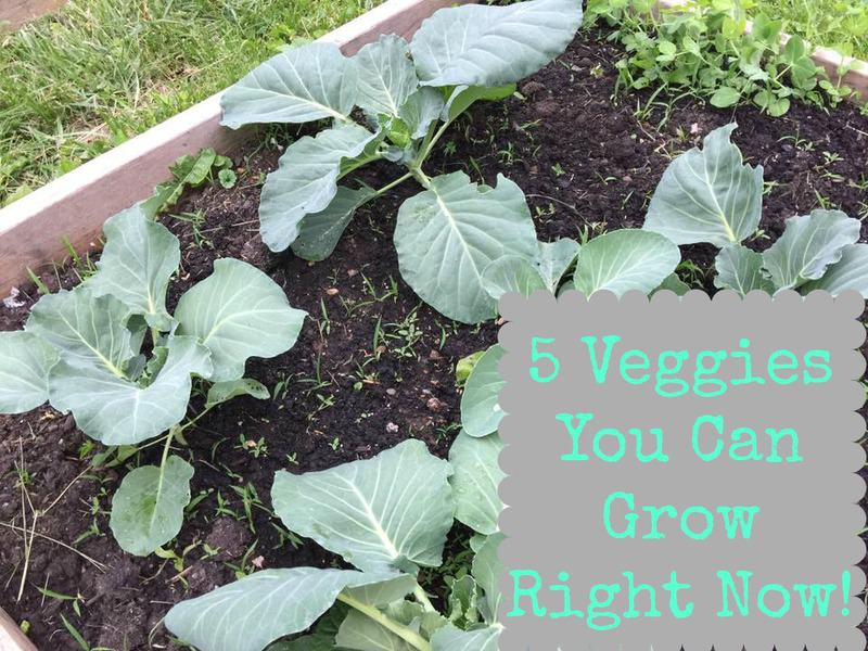 5 Veggie Plants You Can Grow Right Now