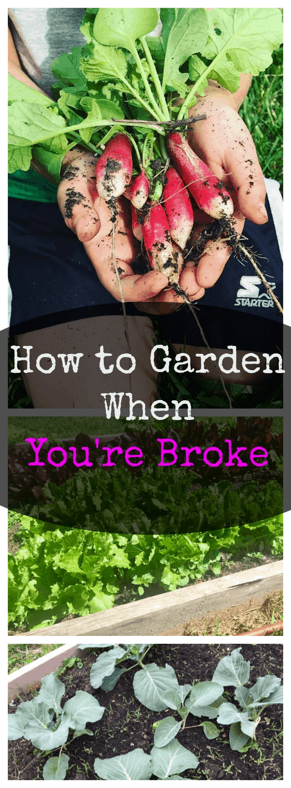 How to Garden When You're Broke
