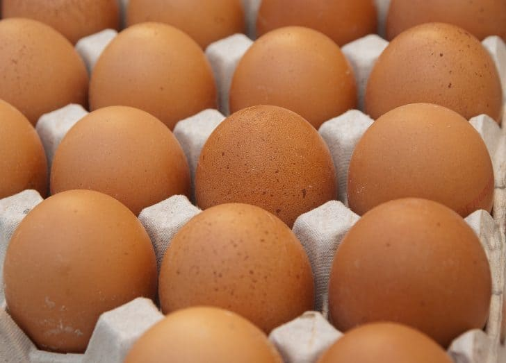 9 Reasons Why Your Hen Stopped Laying Eggs