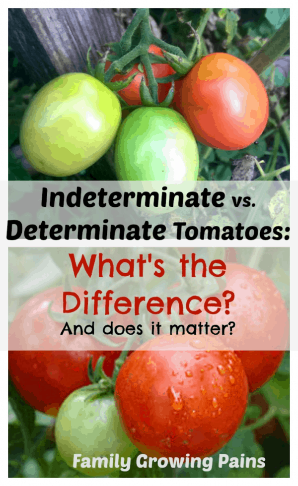 The Crazy Truth about Determinate and Indeterminate Tomatoes