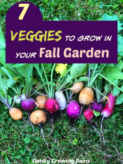 Fall Garden Veggies