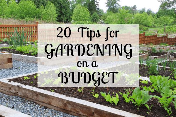 20 Frugal Gardening Tips, Tips For Starting A Garden