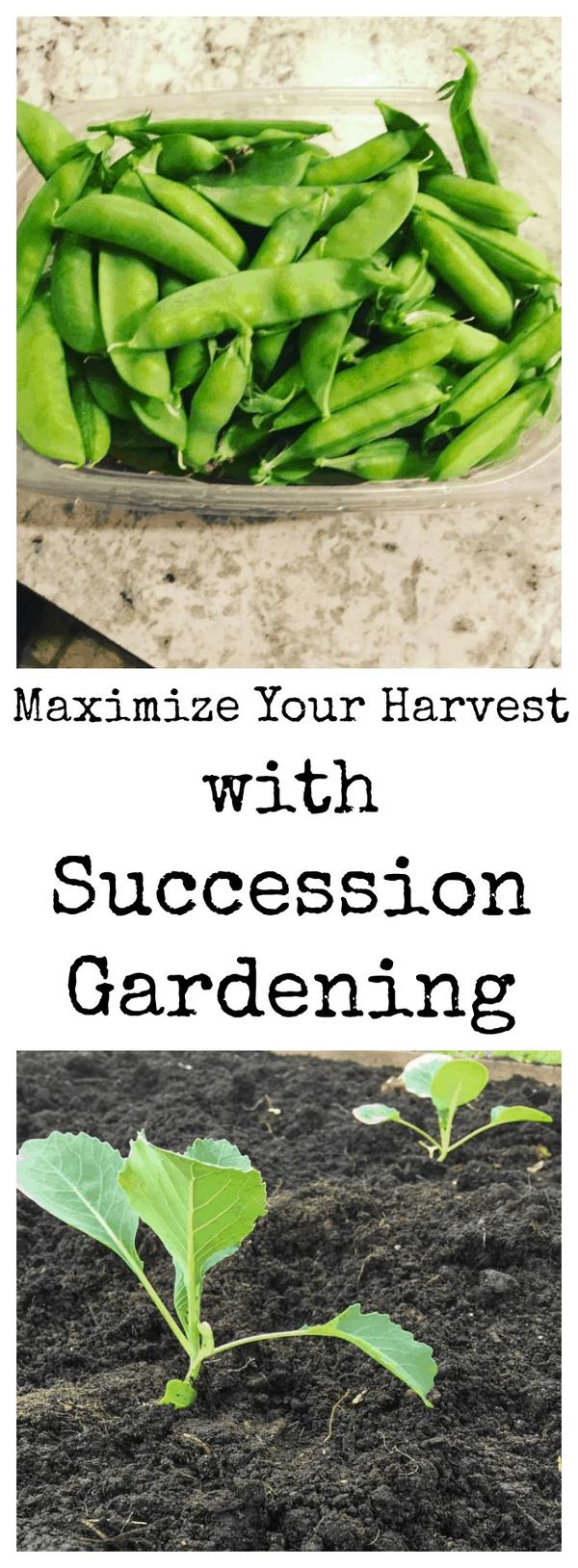 Succession Gardening