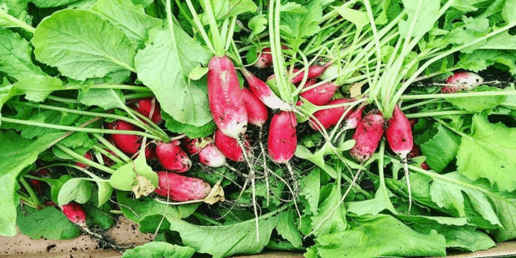 10 Seeds You Can Start Directly in Your Garden