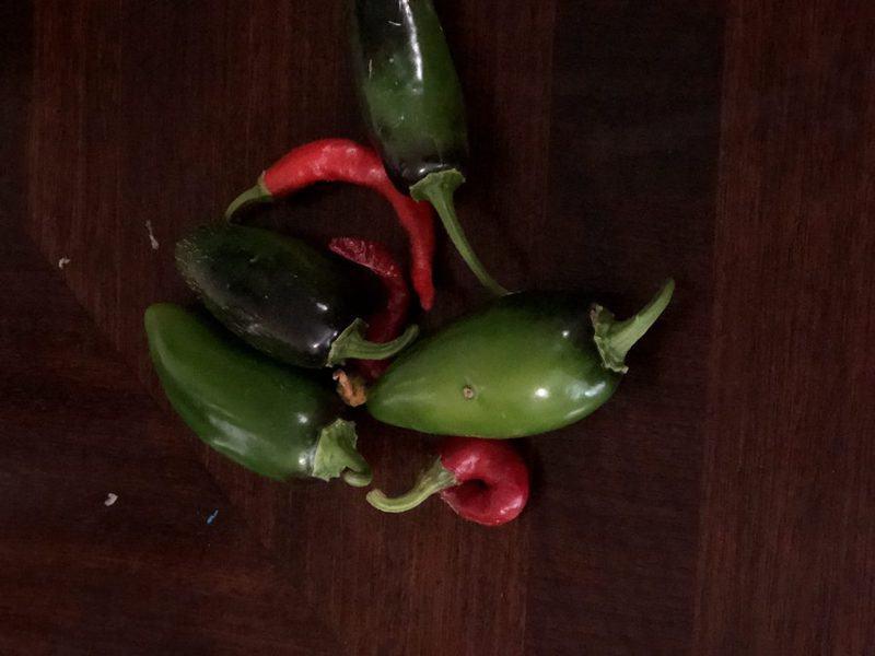 Zucchini Salsa Peppers