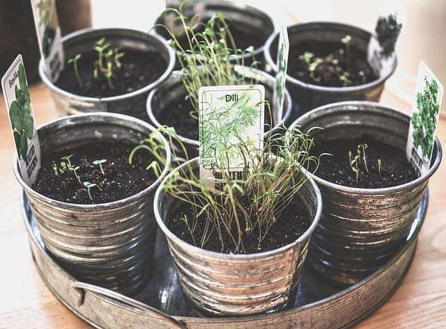 Easiest Culinary Herbs to Grow