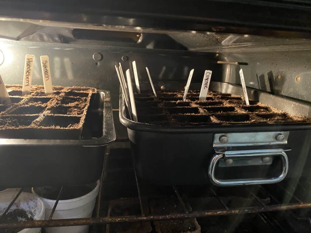 Starting Seeds in the Oven