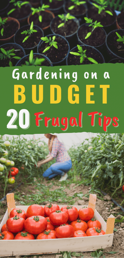 Do you want to save money and garden? Here are 20 frugal gardening tips.