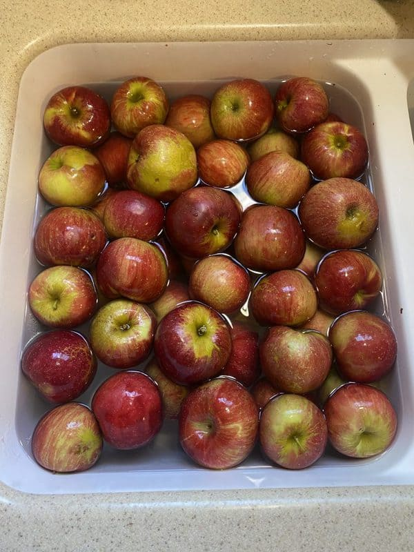 apples soaking in the sink waiting to become apple butter